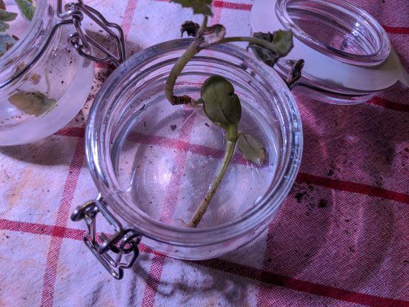 Seedling Keep Falling into Water