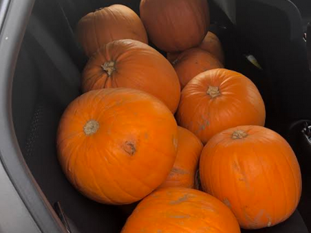 The pumpkins have arrived! But why?