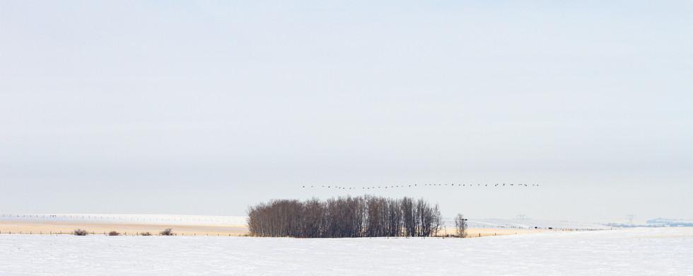 Winter in the Alberta countryside
