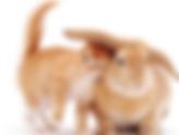 gato-e-coelho-3.png