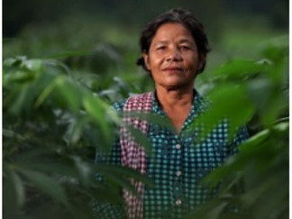 Cash crop vital boost for family income