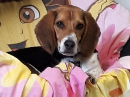 2021 Beagle Paws Calendar Submission