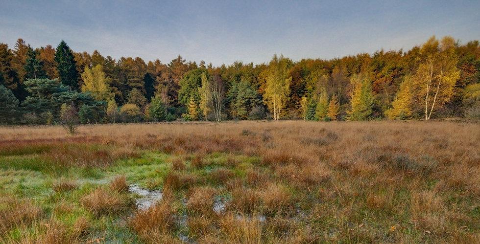 Wetland%252520Creation_edited_edited_edited.jpg