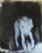 Wjda I (nachtgestalten, 2014, wolf, pain