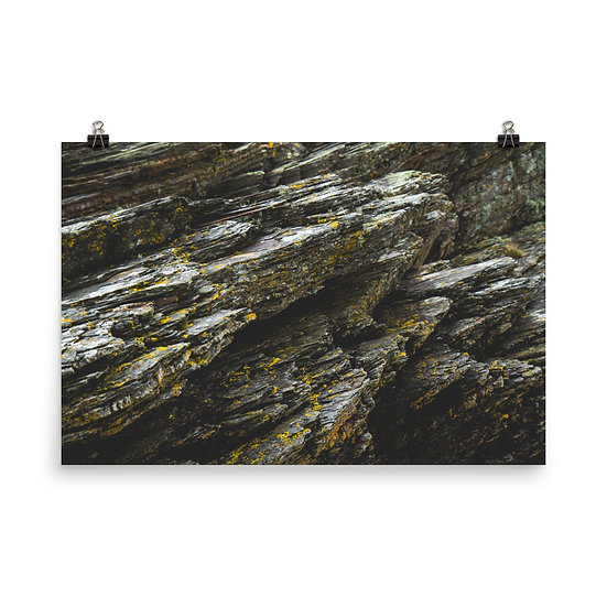 Lichen Print