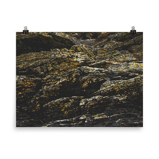 Lichen 2 Print