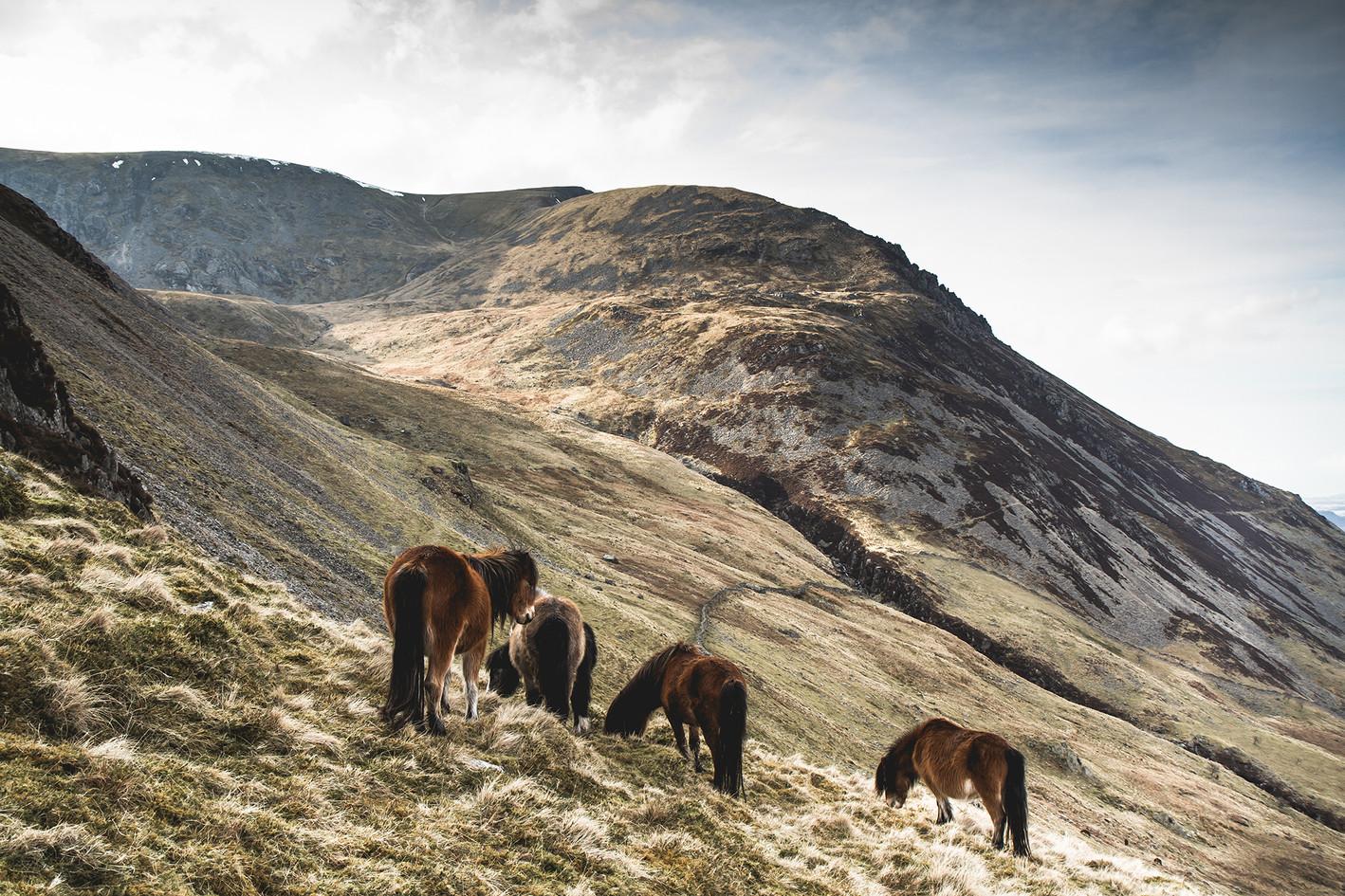 Wales18 096.jpg