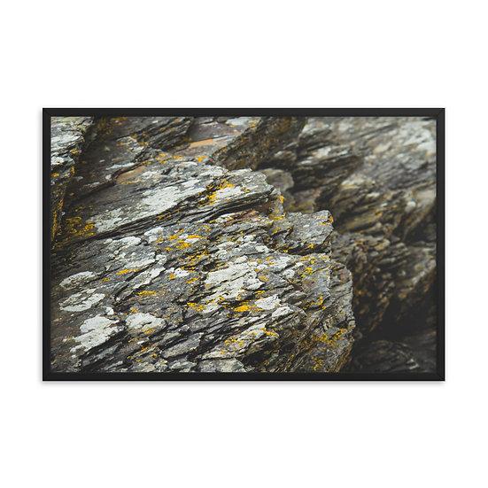 Lichen 3 Framed Print