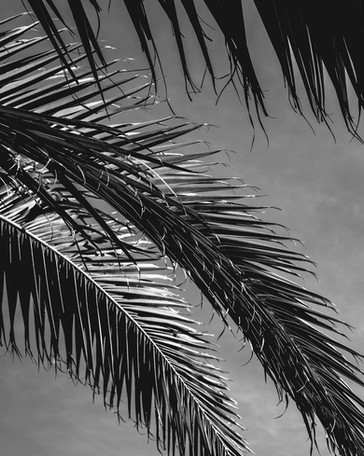 Fuertaventura019.jpg