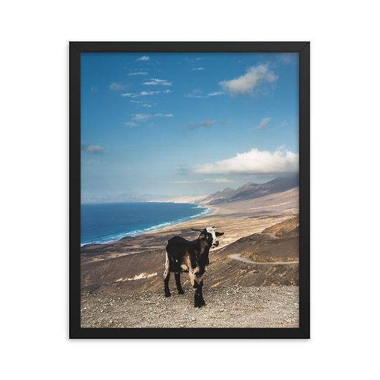 Goat Framed poster