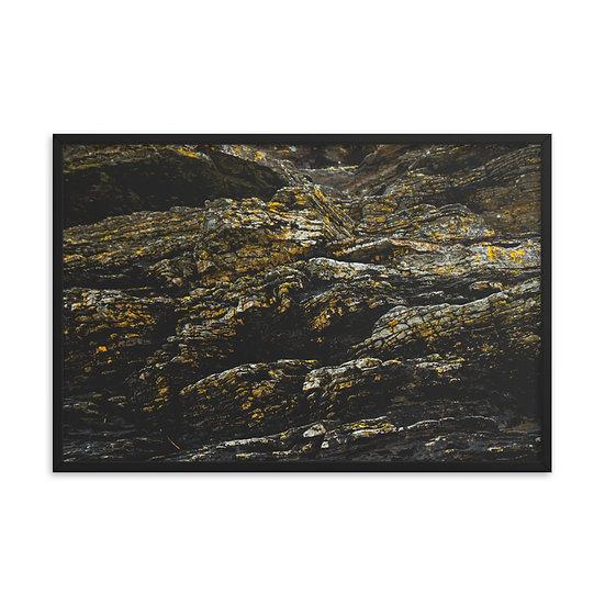 Lichen 2 Framed Print