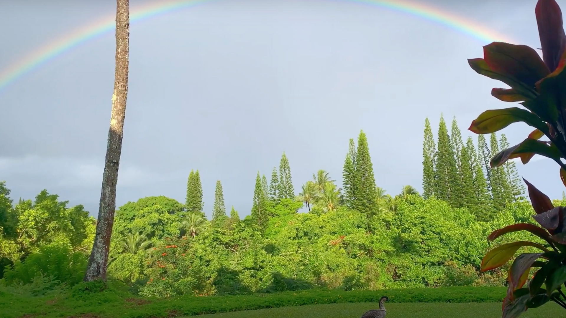 Spirit of Aloha 07 - Double Rainbow & Nene