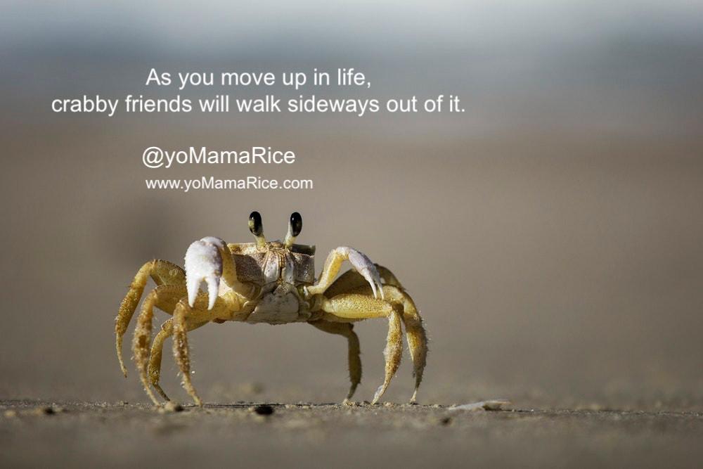 shit friends are crabs - u eat em
