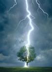 Eurographics Lightning Striking Tree.jpg