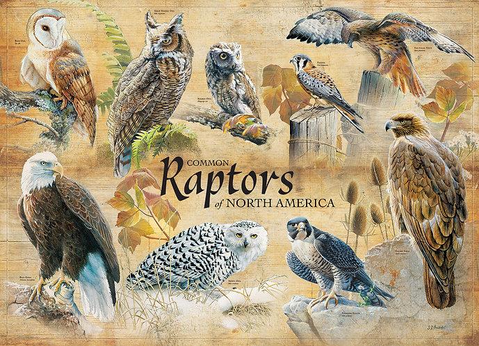 Common Raptors