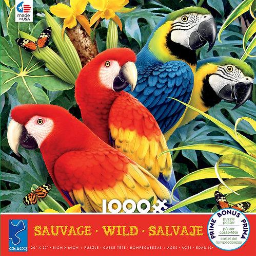 Wild - Majestic Macaws