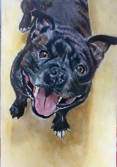 A4 Watercolour & Pencil Pet Portrait (Commission)