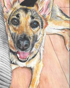 A4 Watercolour & Pencil Pet Portrait ( Gift For Family)