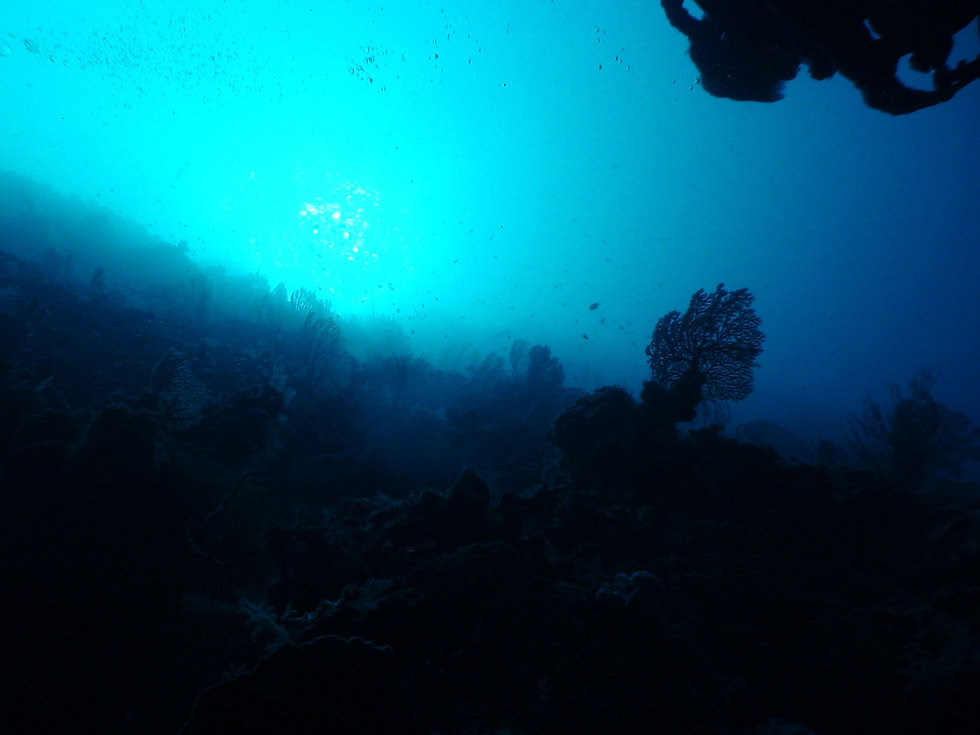 diver-silhouette-hires.jpg
