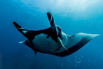 The Deep Sea Food Web