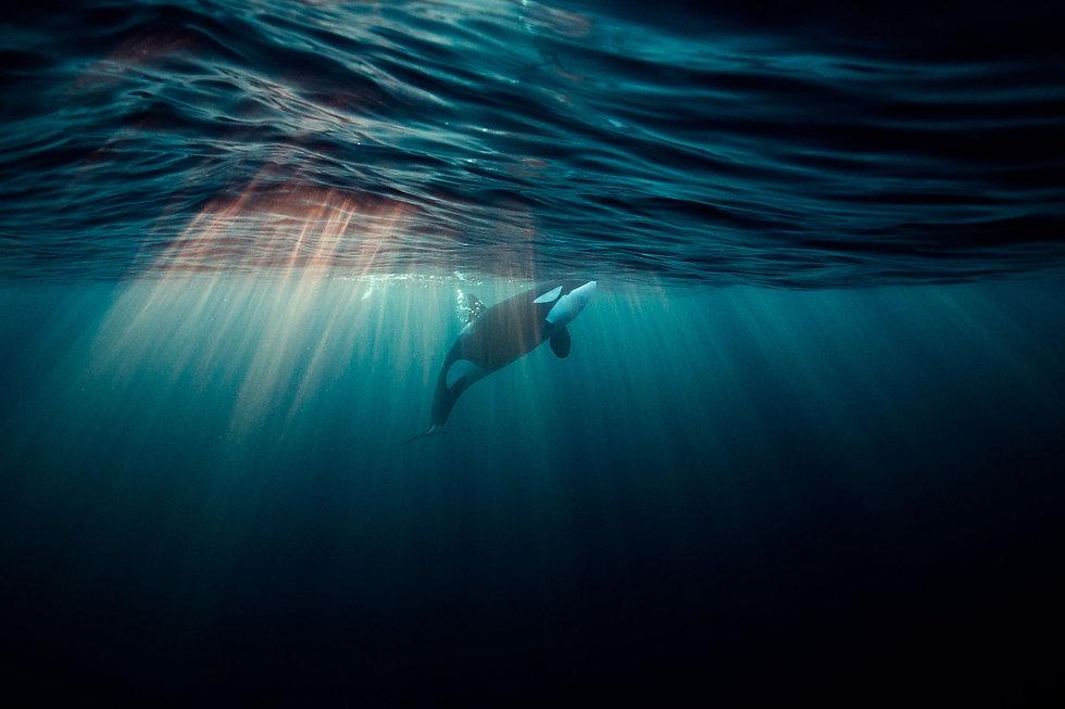 02-underwater-prod-yourshot-449394-11107