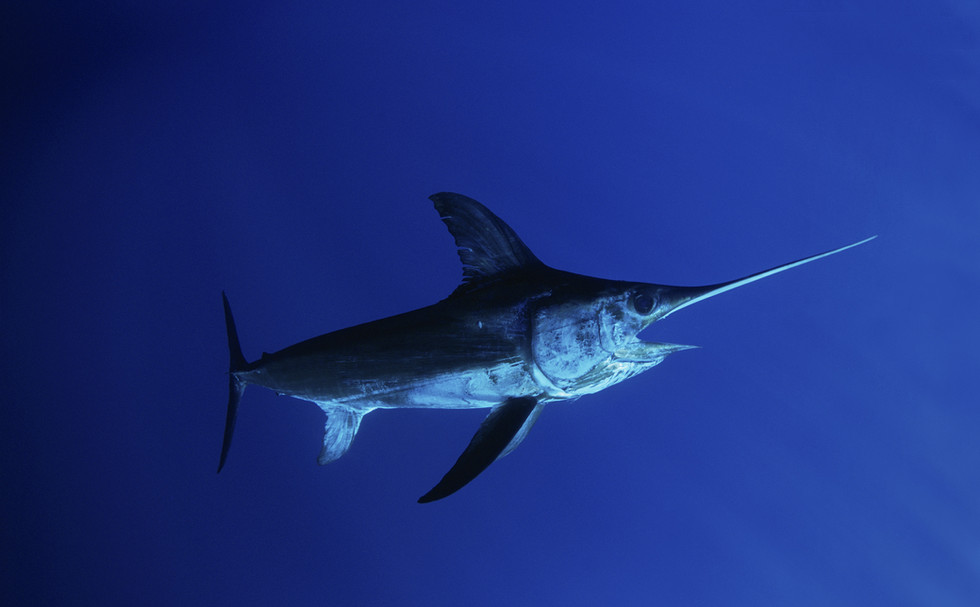 Coming Soon: Life in the Pelagic Zone