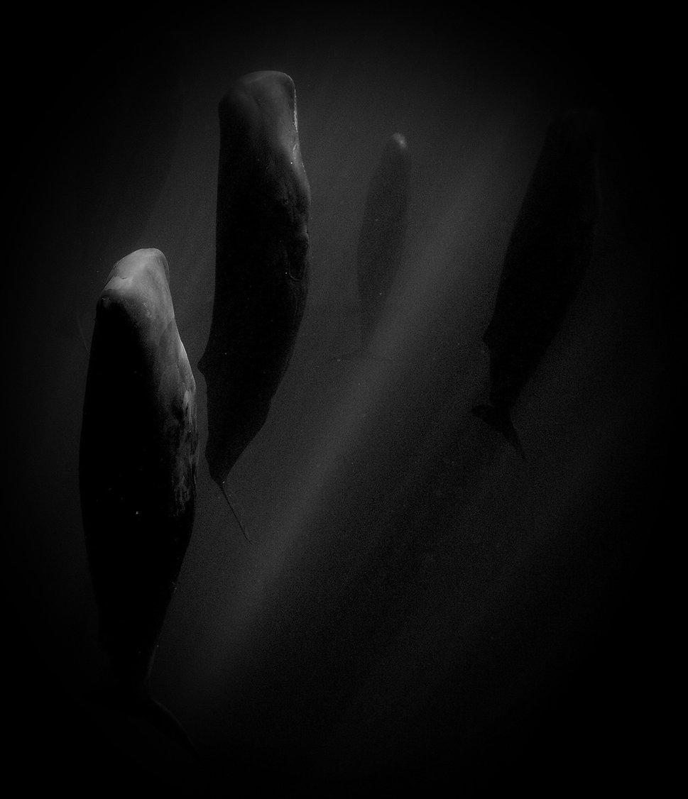 01-sleeping-whale-pod%25252520copy_edite