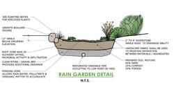 Rain Garden Detail