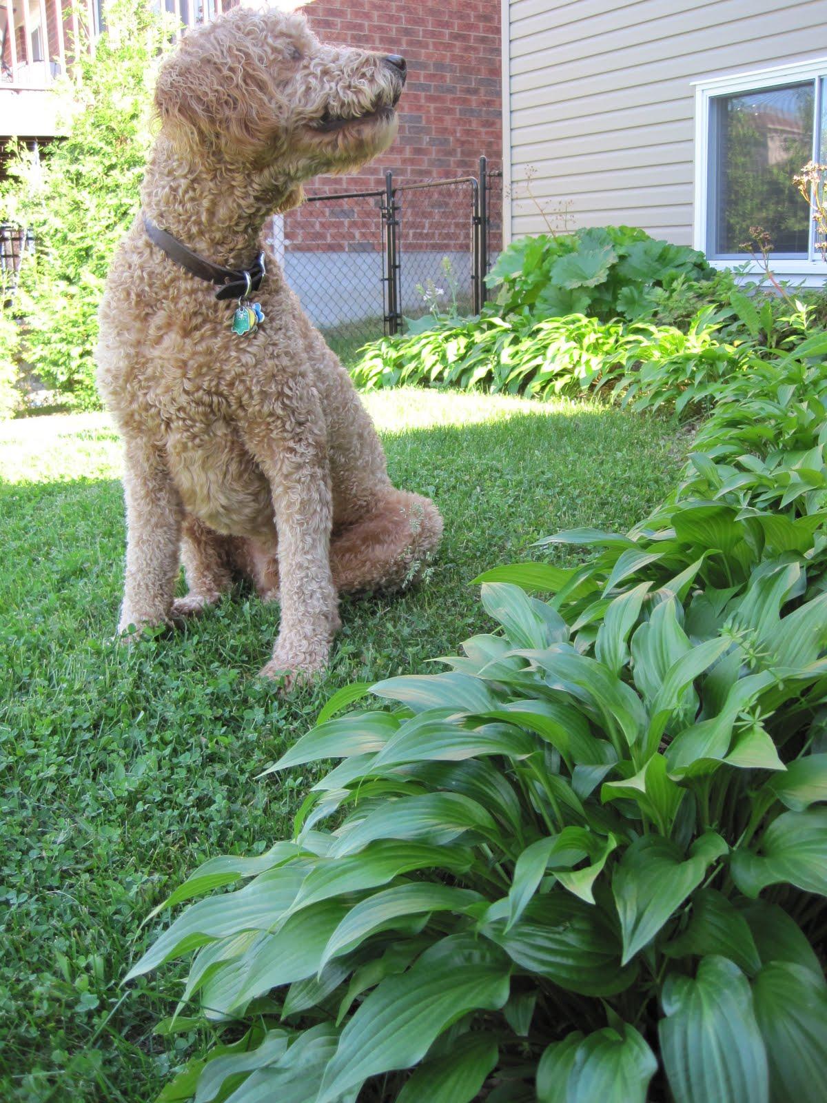 YEAR 4 - 2011 -  HAPPY DOG!