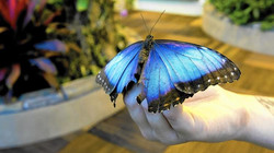 Buterfly encounter 3
