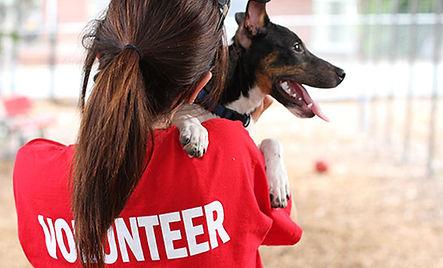 volunteer-1200x630.jpg