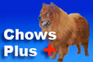 Chows Plus