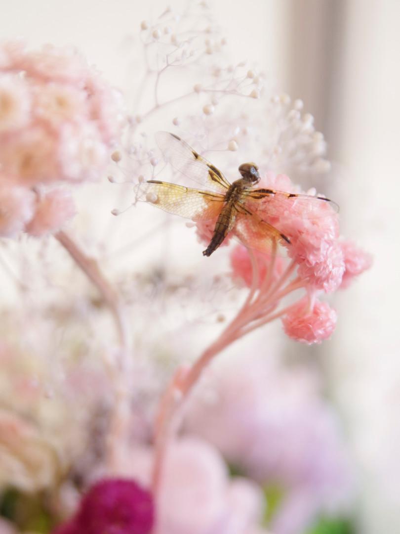 Butterfly Terrarium _2.jpg
