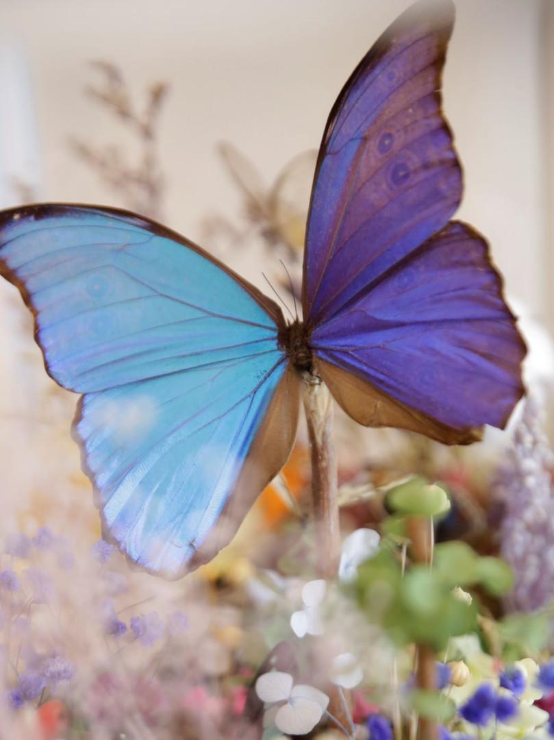 Butterfly Terrarium _1 (1).jpg