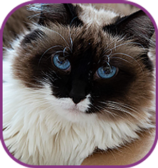 cats-icons-5.png