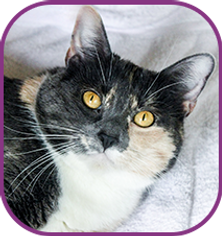 cats-icons-1.png