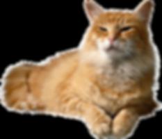 cat_PNG50432.png