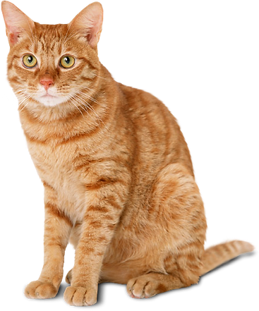kittypng.png