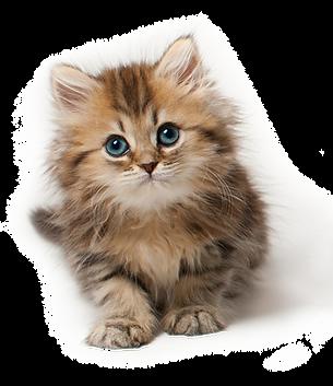 cat_PNG50534.png