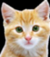 cat_PNG50527.png