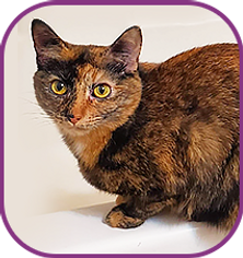 cats-icons-6.png
