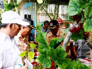 Hari Krida Pertanian Menjadi Destinasi Wisata di Kawasan Wonorejo Terpadu Lumajang