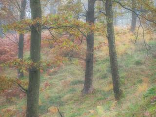 Little Langdale Wood