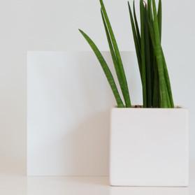PURE MATTE - Pure White-600.jpg