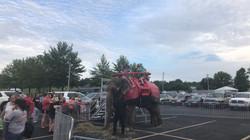 Elephant rides!