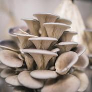oyster mush.jpg