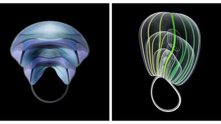 Bord de mer : L'année des méduses...
