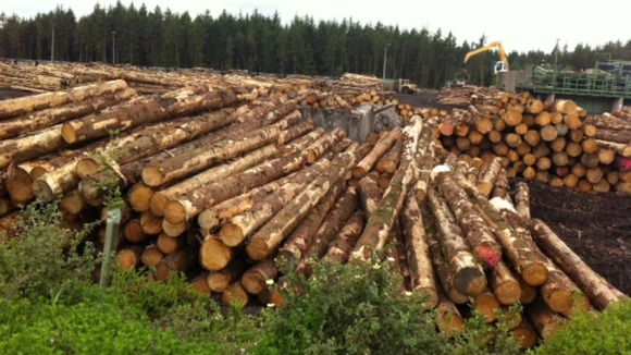 Sustainable timber harvesting