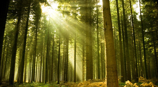 Sustainable timber plantations