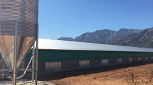Latest Installation - Biomass Hot Air Blowers For Poultry Sheds